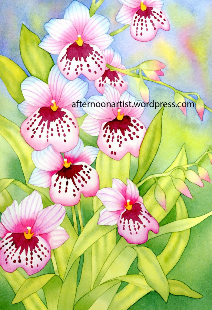 Pink Miltonia Orchids